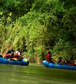 enjoy the sights and sounds of costa rica wildlife with this safari float down the penas blancas river